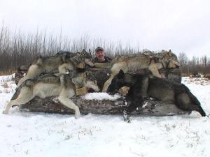 lrg-71-2006-wolf-hunt-063