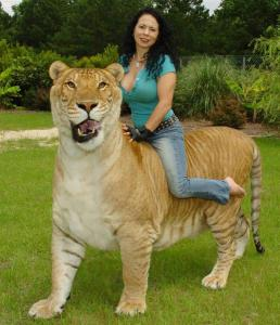 rajani-ferrante-riding-liger-hercules