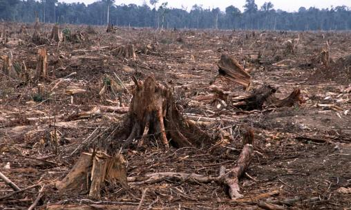 deforestation-causes-HI_104236
