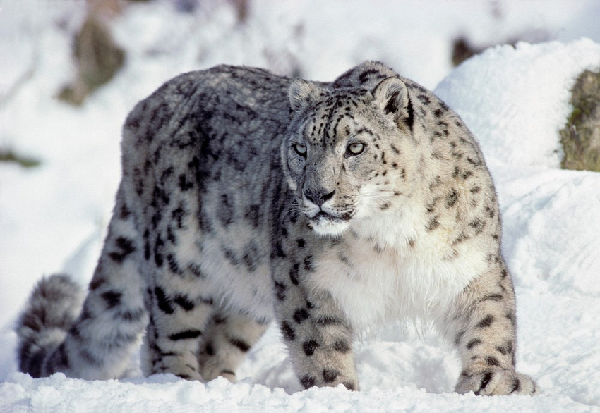 With a sleight of social media hand how black jaguar white tiger continues to choose slander over answers i c a r u s inc