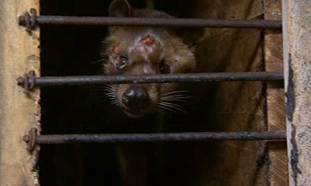 Shot-was-taken-on-a-civet-008