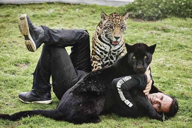 black_jaguar_white_tiger_el_lider_de_la_manada_5984_620x413